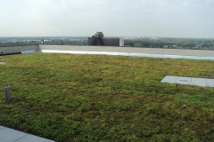 Green-Roof1