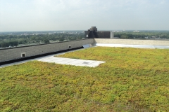 Green-Roof3